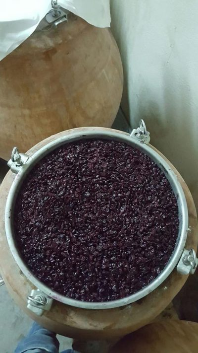 """Storie di viticoltori coraggiosi che scelgono l'anfora: questa è la Toscana de """"La Terracotta e il Vino"""""""